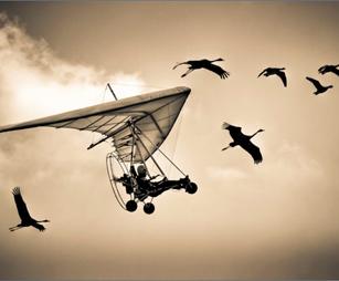 ulm-oiseaux
